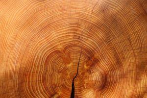Stromy a impregnácia dreva